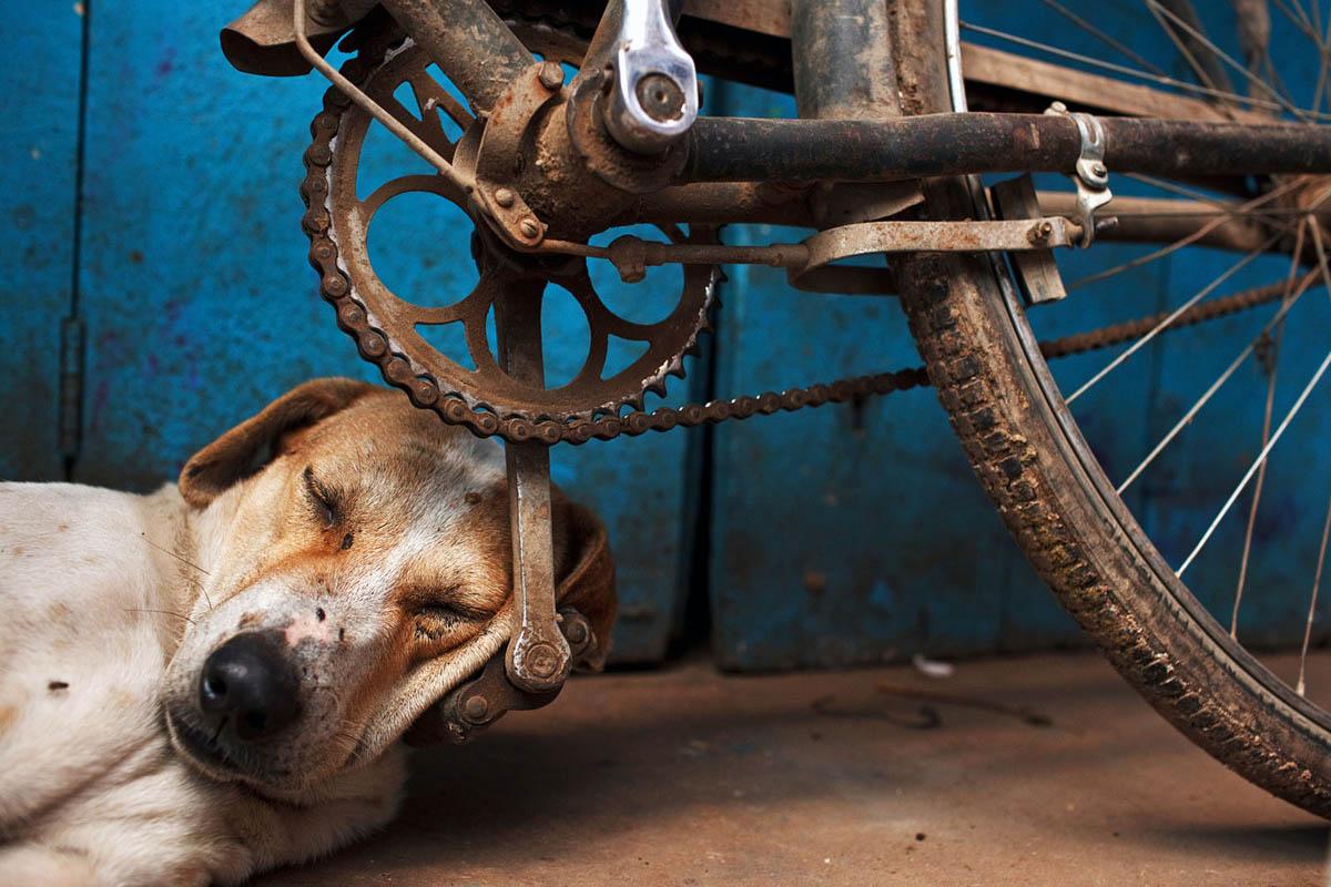 india_varanasi_2011_sleeping_dog_bicycle_bike_pedal_street_photography