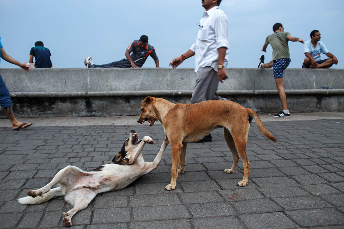 Morning exercises on the sea promenade along Marine Drive in Mumbai, India.