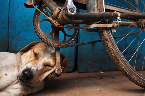 india_varanasi_2011_sleeping_dog_bicycle_bike_pedal_street_photography_maciej_dakowicz