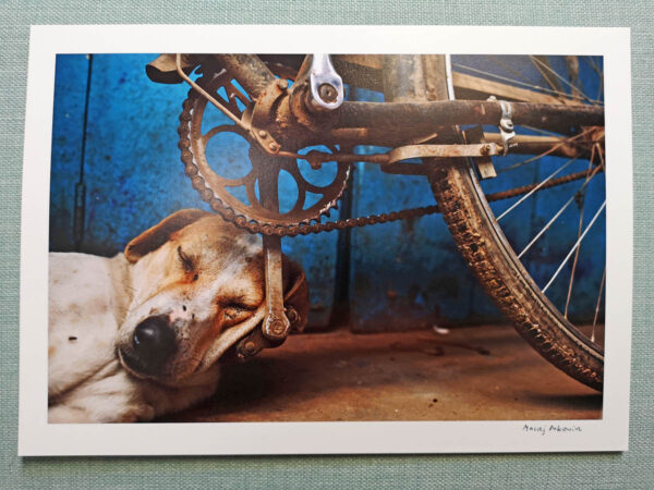 maciej_dakowicz_print_for_sale_a4_epson_sleeping_dog_varanasi_india_1