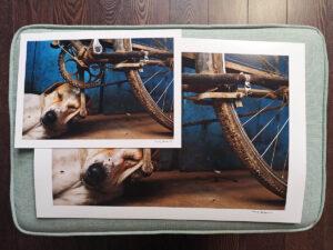 maciej_dakowicz_print_art_sale_a3_bicycle_dog_varanasi_india_photo_01