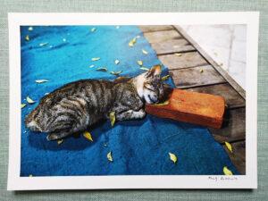 maciej_dakowicz_print_art_sale_a4_myanmar_sleeping_cat_brick_01