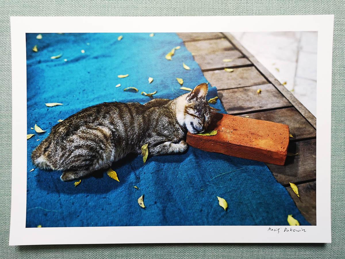 maciej_dakowicz_print_art_sale_a4_myanmar_sleeping_cat_brick_01.jpg