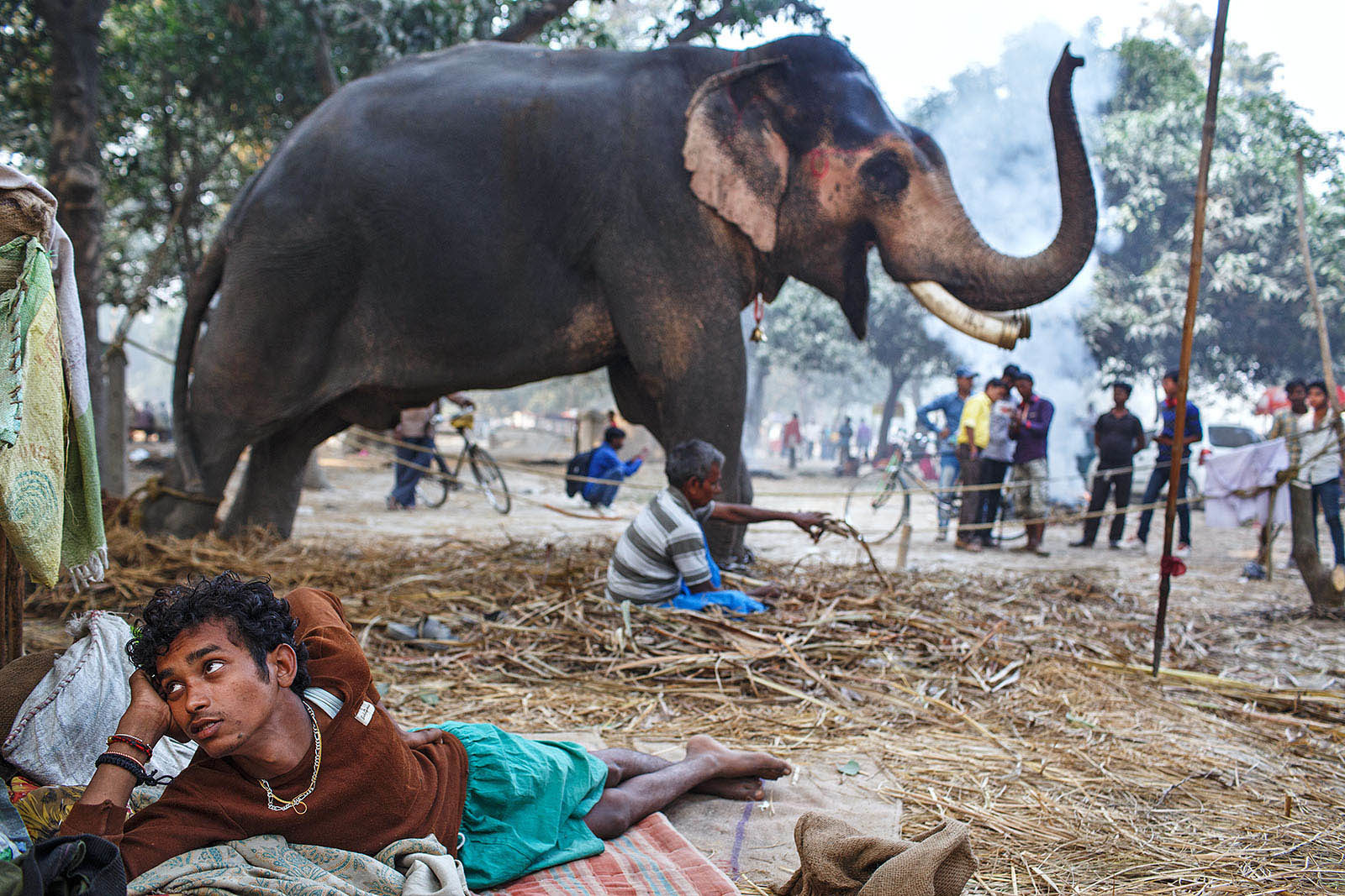 india_bihar_sonpur_sonepur_mela_fair_rural_animal_elephant-1600x1067.jpg